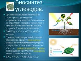 Биосинтез углеводов. Организмы животных не способны синтезировать углеводы из