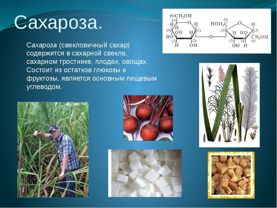 Сахароза. Сахароза (свекловичный сахар) содержится в сахарной свекле, сахарно...