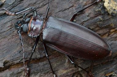 Самый большой в мире жук (12 фото)