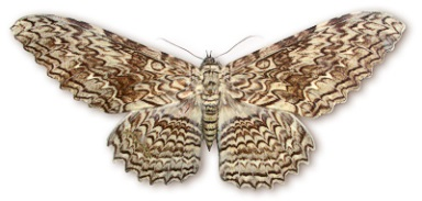 Ажурные бабочки. Ажурные бабочки из бумаги