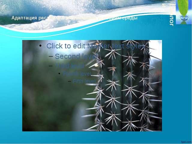 Адаптация растений к засушливым условиям среды Биологи