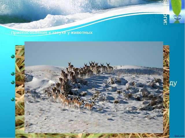 Приспособления к засухе у животных летняя спячка в слизевом коконе (дождевой...