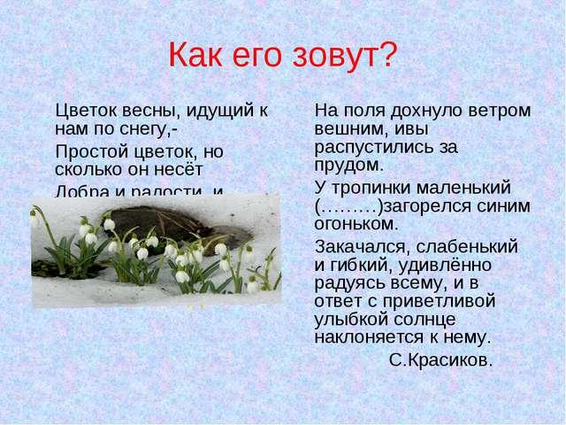 Как его зовут? Цветок весны, идущий к нам по снегу,- Простой цветок, но сколь...