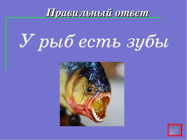 Правильный ответ У рыб есть зубы