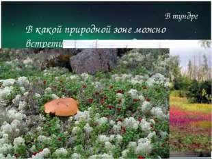 В какой природной зоне можно встретить грибы выше деревьев? В тундре