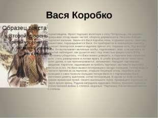 Вася Коробко Черниговщина. Фронт подошел вплотную к селу Погорельцы. На окраи