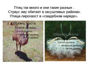 Птиц так много и они такие разные . Страус эму обитает в засушливых районах.