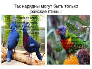 Так нарядны могут быть только райские птицы!