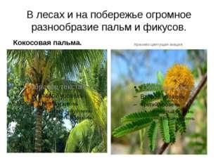 В лесах и на побережье огромное разнообразие пальм и фикусов. Кокосовая пальм