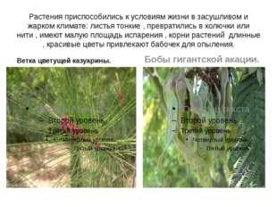 Растения приспособились к условиям жизни в засушливом и жарком климате: листь