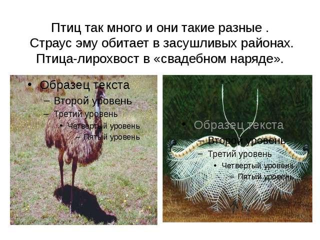 Птиц так много и они такие разные . Страус эму обитает в засушливых районах....