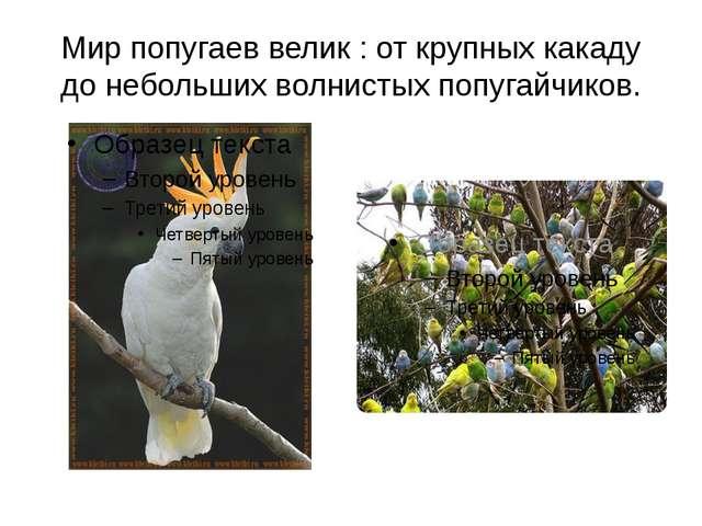 Мир попугаев велик : от крупных какаду до небольших волнистых попугайчиков.