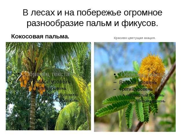 В лесах и на побережье огромное разнообразие пальм и фикусов. Кокосовая пальм...