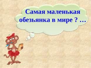 Самая маленькая обезьянка в мире ? …