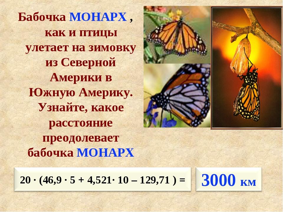 Бабочка МОНАРХ , как и птицы улетает на зимовку из Северной Америки в Южную А...