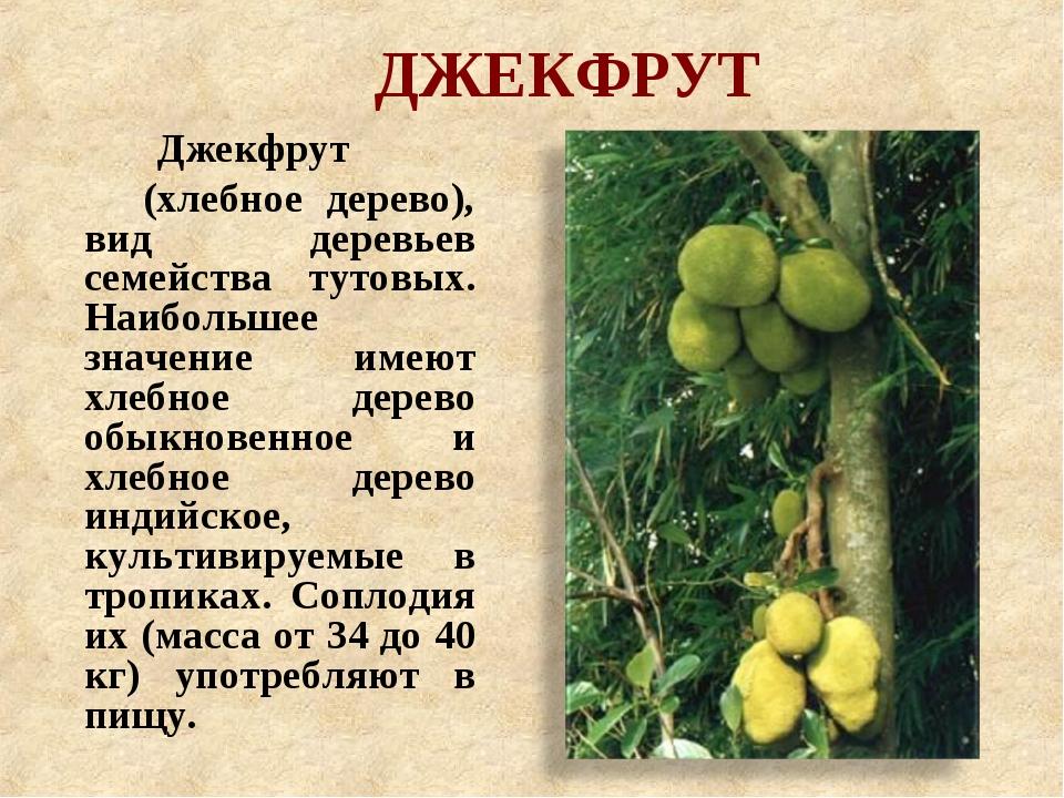 ДЖЕКФРУТ Джекфрут (хлебное дерево), вид деревьев семейства тутовых. Наибольше...