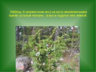 1909год. В неизвестном лесу на кусту можжевельника прилёг усталый человек, ус