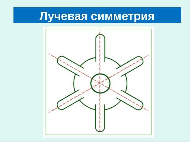 Лучевая симметрия