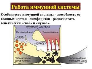 Работа иммунной системы Особенность иммунной системы - способность ее главных