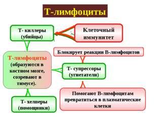 Т-лимфоциты Т-лимфоциты (образуются в костном мозге, созревают в тимусе). Т-