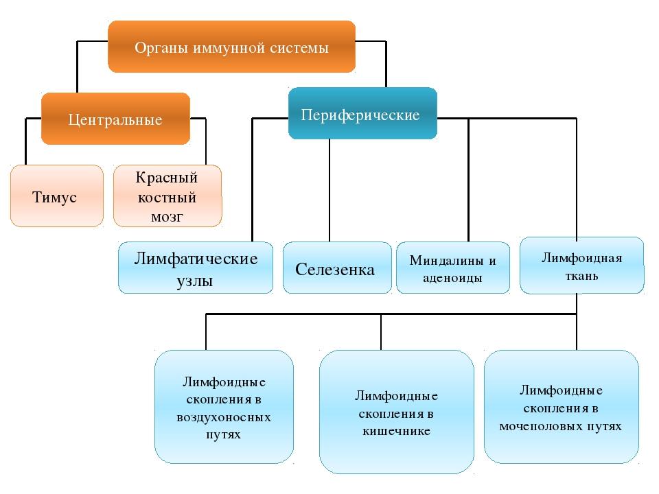 Органы иммунной системы Центральные Периферические Тимус Красный костный мозг...