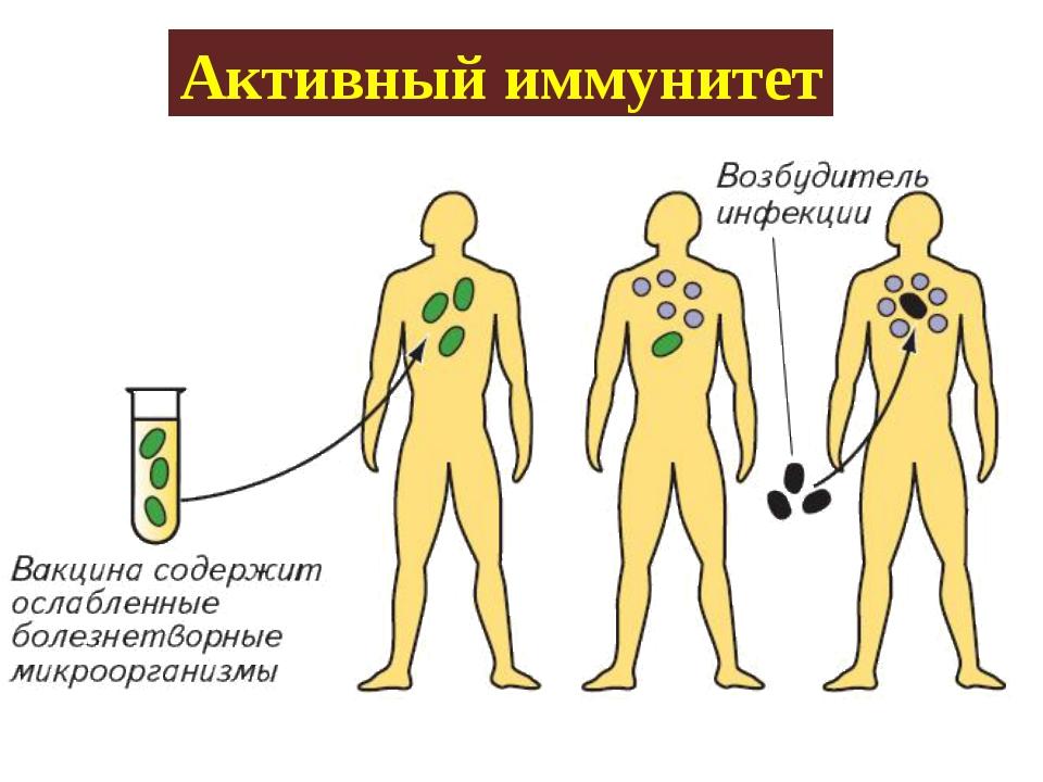 Активный иммунитет