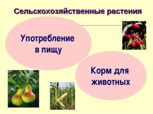 Сельскохозяйственные растения Употребление в пищу Корм для животных