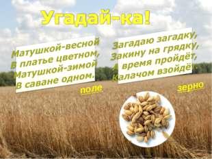 поле зерно