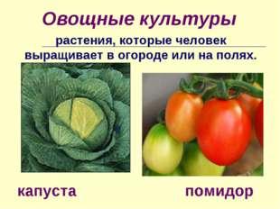 Овощные культуры растения, которые человек выращивает в огороде или на полях.