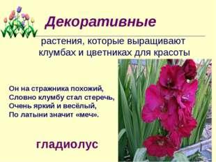 Декоративные растения, которые выращивают клумбах и цветниках для красоты Он