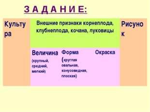 З А Д А Н И Е: КультураВнешние признаки корнеплода, клубнеплода, кочана, лук