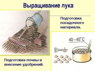 Подготовка почвы и внесение удобрений. Подготовка посадочного материала. Выра