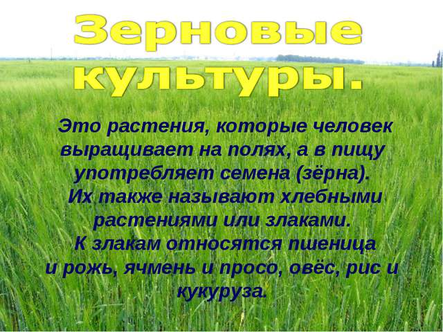 Это растения, которые человек выращивает на полях, а в пищу употребляет семен...