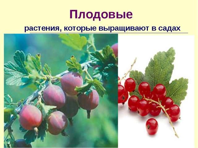 Плодовые растения, которые выращивают в садах