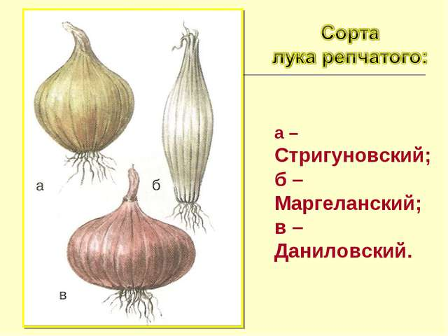 а – Стригуновский; б – Маргеланский; в – Даниловский.
