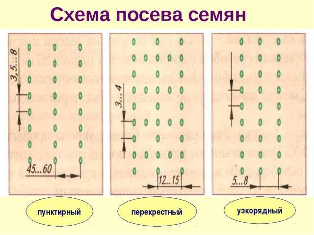 Схема посева семян пунктирный перекрестный узкорядный