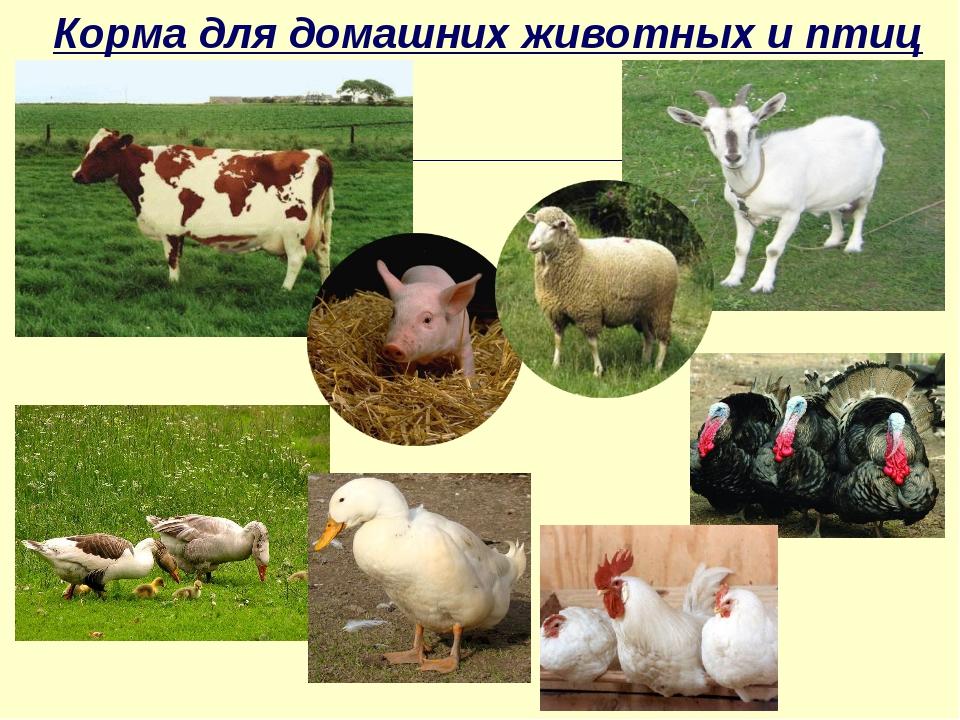 Корма для домашних животных и птиц