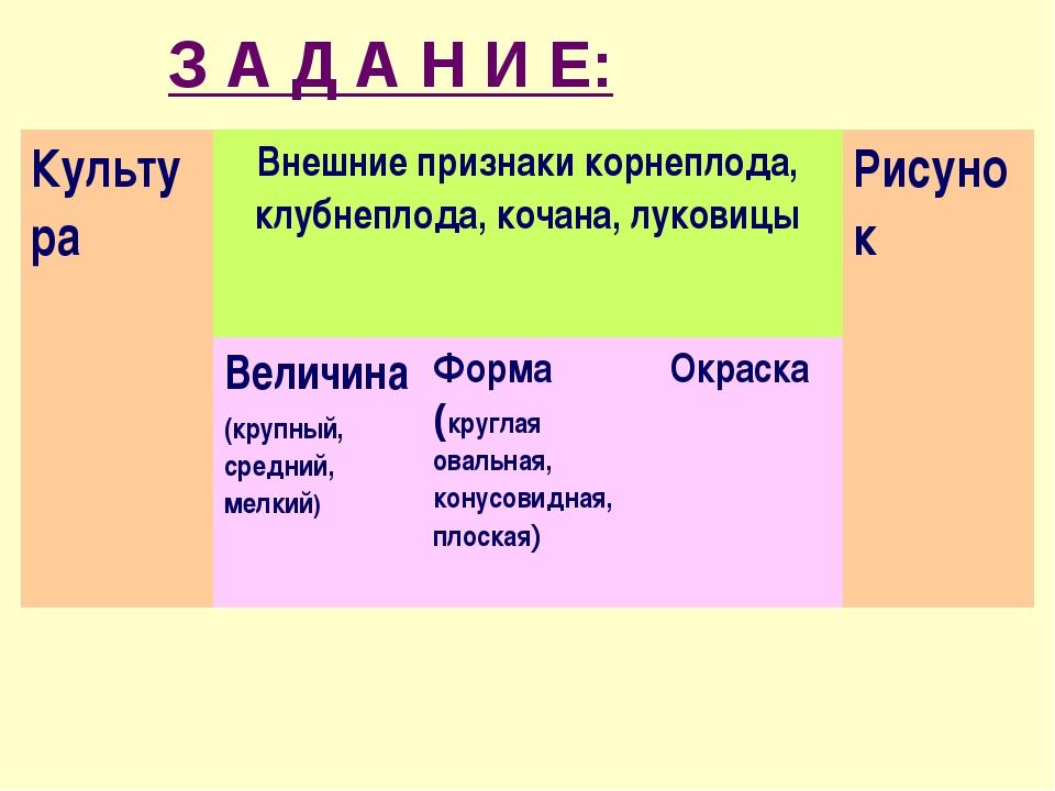 З А Д А Н И Е: КультураВнешние признаки корнеплода, клубнеплода, кочана, лук...