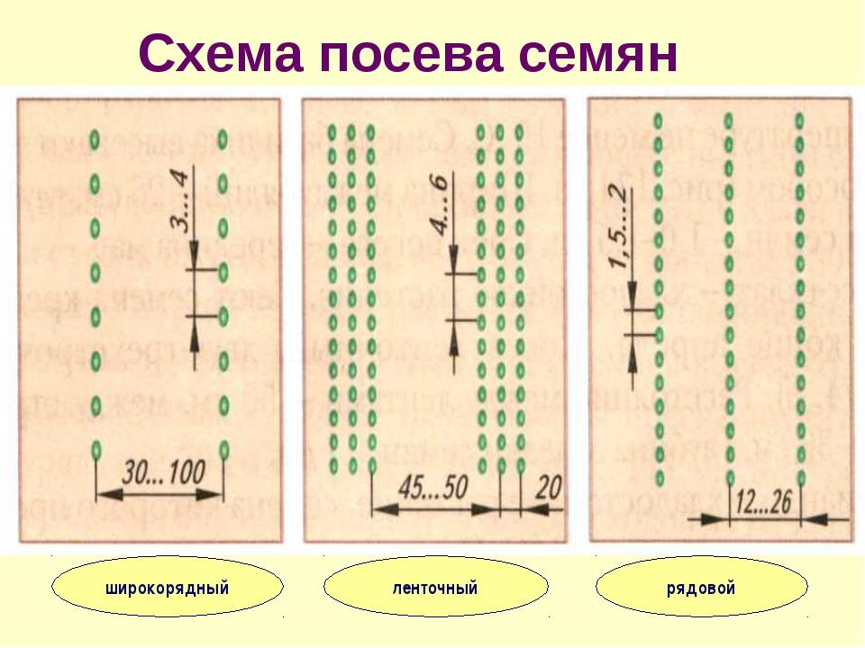 Схема посева семян широкорядный ленточный рядовой