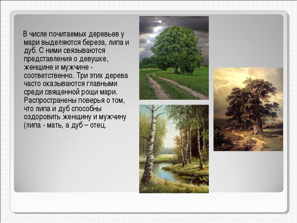 В числе почитаемых деревьев у мари выделяются береза, липа и дуб. С ними свя...