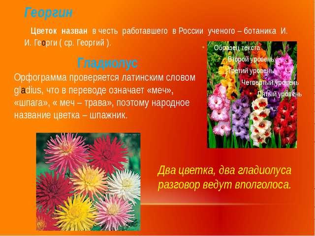 Георгин Цветок назван в честь работавшего в России ученого – ботаника И. И. Г...