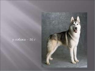 у собаки – 16 с