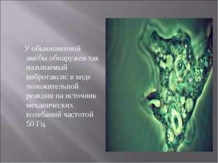 У обыкновенной амёбы обнаружен так называемый вибротаксис в виде положительн
