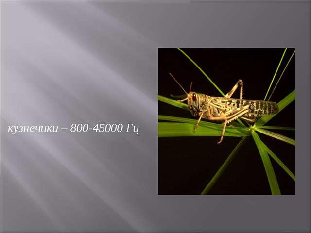 кузнечики – 800-45000 Гц