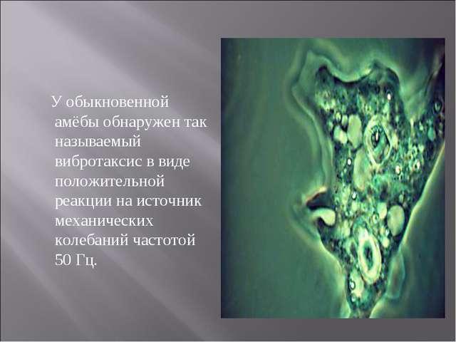 У обыкновенной амёбы обнаружен так называемый вибротаксис в виде положительн...