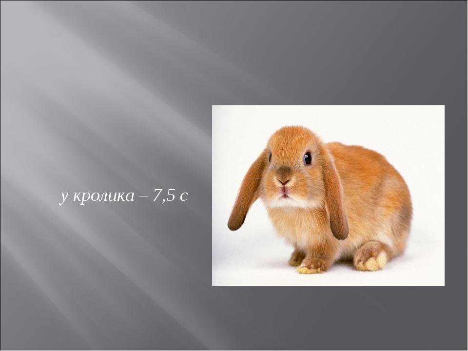 у кролика – 7,5 с
