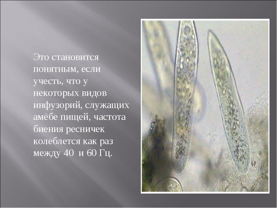 Это становится понятным, если учесть, что у некоторых видов инфузорий, служа...