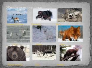 Северный Олень Росомаха Волк Зайцы Песец Лиса Бурый медведь Лось Куница Живо