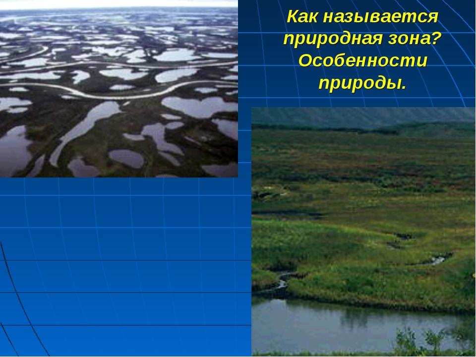 Как называется природная зона? Особенности природы.