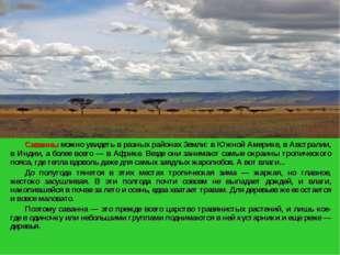 Саванны можно увидеть в разных районах Земли: в Южной Америке, в Австралии,
